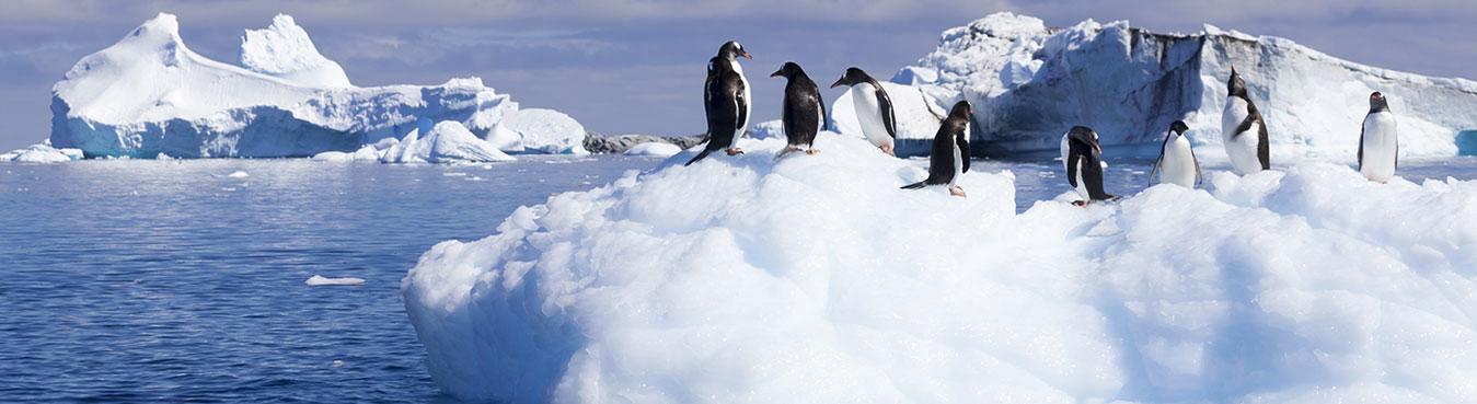 South America & Antarctica