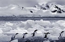 22-Day S. America & Antarctica