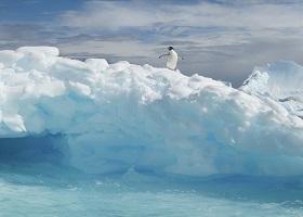 Antarctic Experience