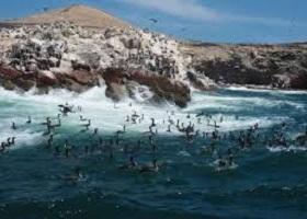 Islas Ballestas, Peru / General San Martin (Pisco), Peru