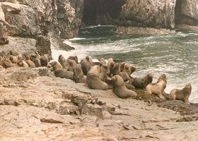 Islas Guanape, Peru